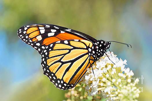 Regina Geoghan - Monarch Butterfly Portrait
