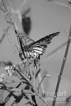 Monarch - BW by Tannis Baldwin