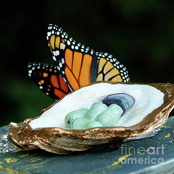 Monarch Chrysalis in Oyster Shell with Butterfly by Luana K Perez