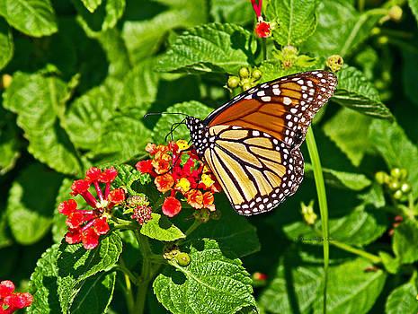Monarch I by Patricia Griffin Brett