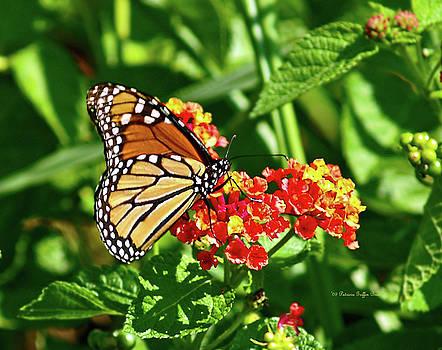 Monarch II by Patricia Griffin Brett