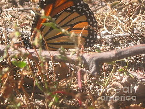 Monarch In The Grass by Iris Newman