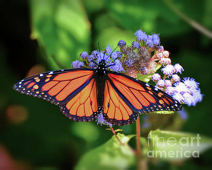Monarch in the Mist by Kerri Farley