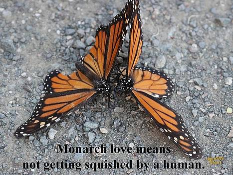 Gary Canant - Monarch Love Greeting Card