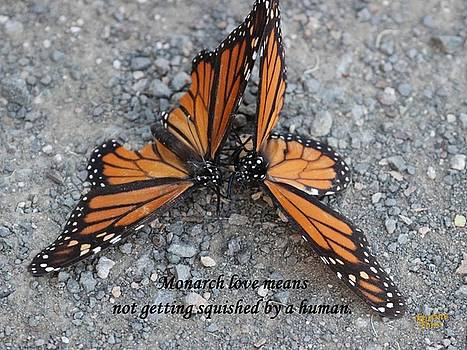 Gary Canant - Monarch love means not getting squished