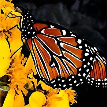 Monarch Masterpiece by Patricia Rex