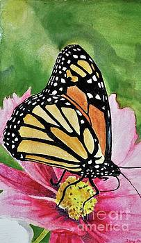 Monarch on Cosmos by Lori Moon