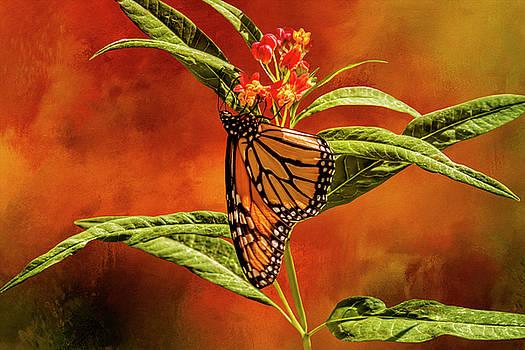 Monarch on Milkweed by Diane Schuster