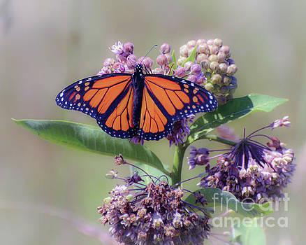 Monarch on the Milkweed by Kerri Farley