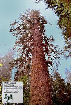 Monarch Sitka Spruce And Marker sign 001 by George Bostian