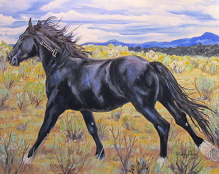 Monero Mustang by Melody Perez