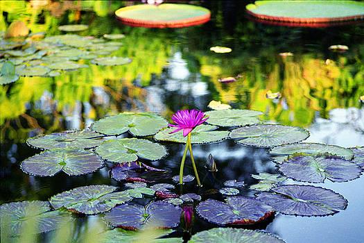 Monet Lilies by Gary Dean Mercer Clark
