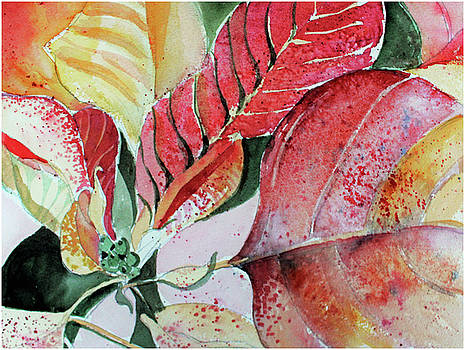 Monet Poinsettia by Mindy Newman