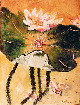 Monet's Water Lily by Seth Weaver
