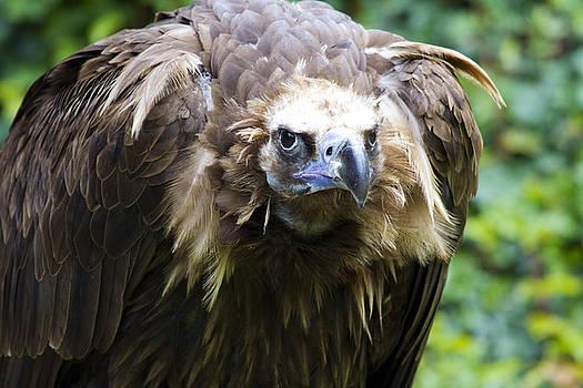 Heiko Koehrer-Wagner - Monk Vulture 3