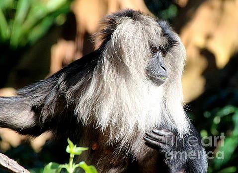Monkey #2 by Lennie Malvone