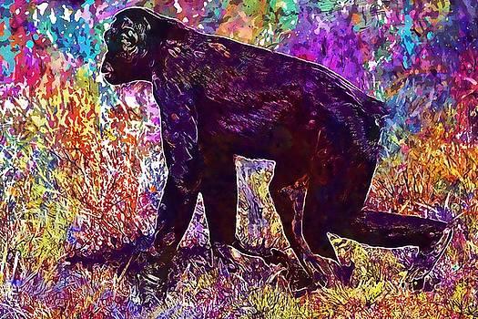 Monkey Animal Mammal Nature Bonobo  by PixBreak Art