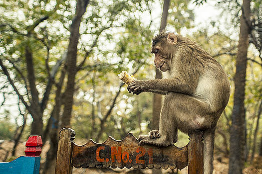 Monkey by Azad Pirayandeh