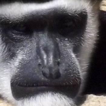 #monkey #cleveland #clevelandgram by Pete Michaud