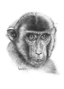 Monkey by Dave Lawson