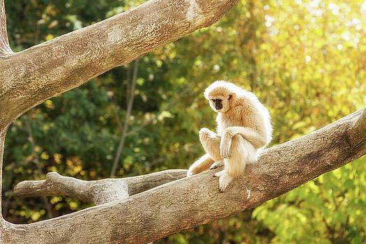 Monkey in Autumn by Victoria Winningham