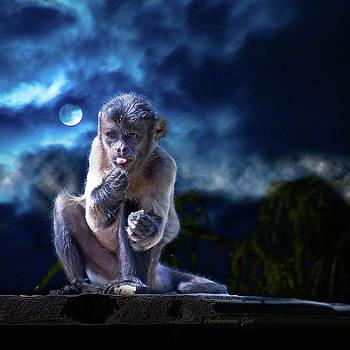 Monkey by Jos Verhoeven