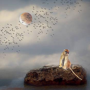 Monkey on a Rock by Rebecca Cozart