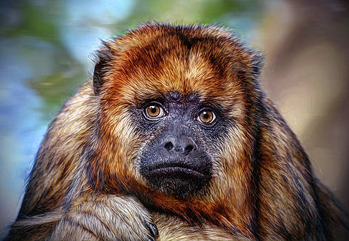 Monkey Portrait  by Savannah Gibbs