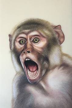 Monkey  by Shiv