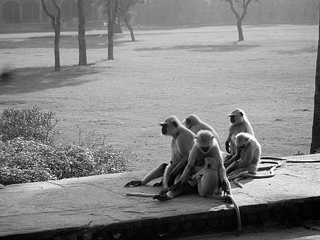 Monkeys at Akhbar's Tomb by Daniel Solone