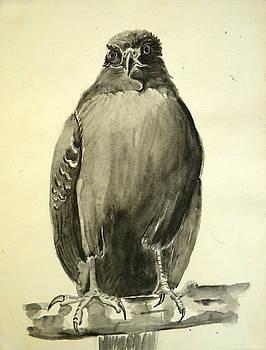 Monochromatic Hawk by Pam Van Londen