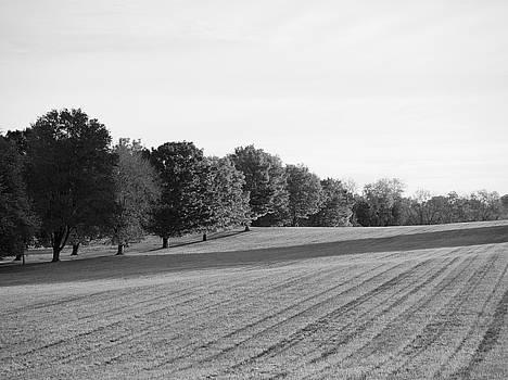 Richard Reeve - Monochrome Fall