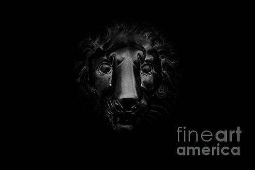 Monochrome Lion by Floyd Menezes