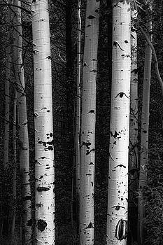 Monochrome Wilderness Wonders by James BO Insogna