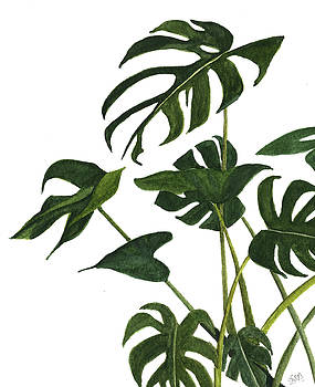 Monstera bunch  by Garima Srivastava