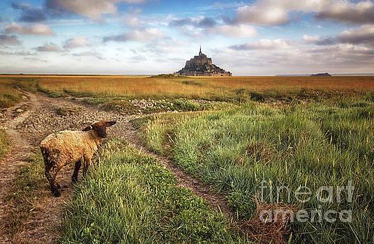 Mont Saint Michel's sheep by Dominique Guillaume