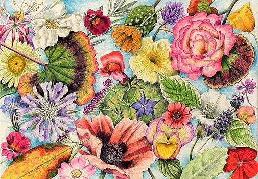 Montage of Summer Flower Heads by Lynne Henderson