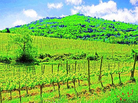 Dennis Cox - Montalcino Above a Vineyard