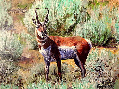 Montana Antelope Buck  by Ruanna Sion Shadd a'Dann'l Yoder