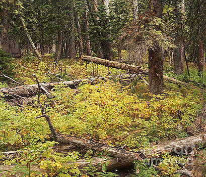 Montana Forest Floor in Early Autumn by Matt Tilghman