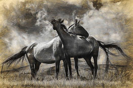 Randall Nyhof - Montana Horses Digital Graphic