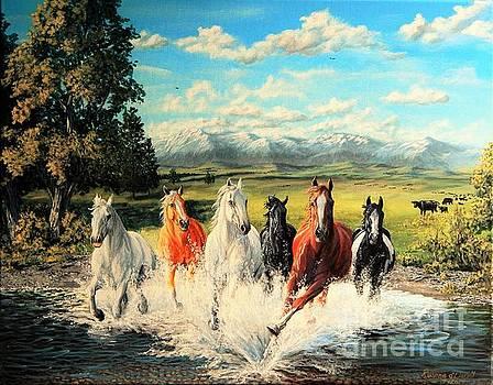 Montana Range Horses by Ruanna Sion Shadd a'Dann'l Yoder