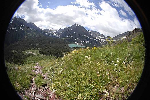 Montana Rolling Wildflowers by Jody Lovejoy