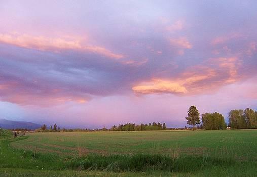 Montana Sunsets 3 by Deahn      Benware