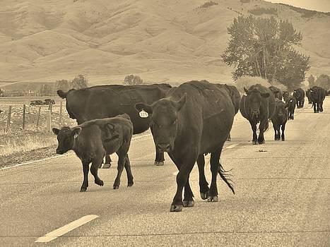 Leah Grunzke - Montana Traffic Jam