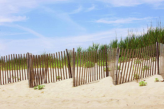 Art Block Collections - Montauk Sand Fence