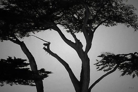 Monterey Cypress I BW by David Gordon