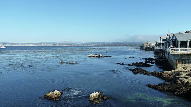 Monterey by David BERNARD
