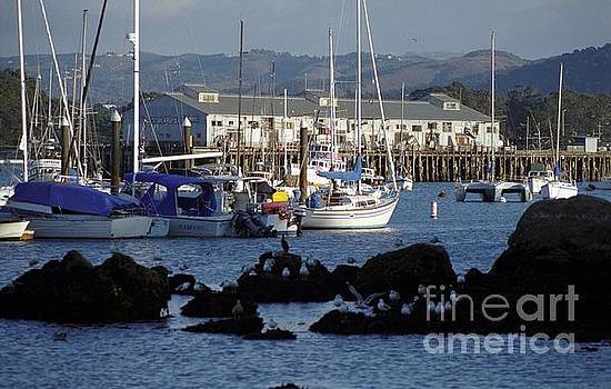 Monterey Harbor and Wharf 2 by James B Toy