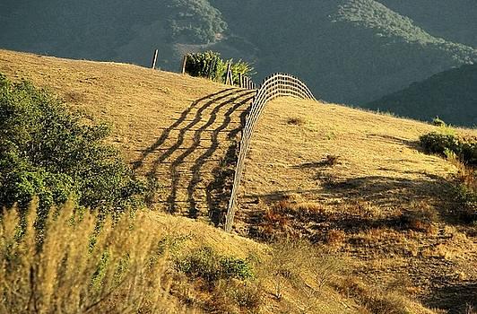 Ellen Cotton - Monterey Hills